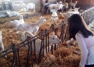 bimba con capre