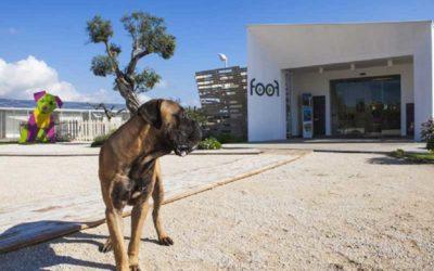 Foof, il Museo del Cane