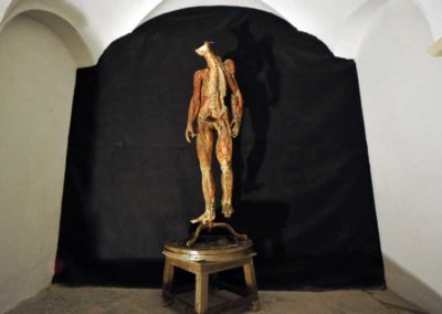macchina anatomica smontabile in cartapesta