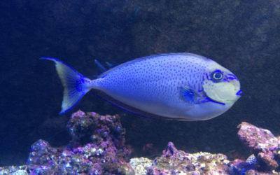 Trattamento malattie dei pesci da acquario