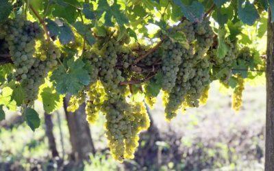Scopri l'Irpinia con i Wine Tour